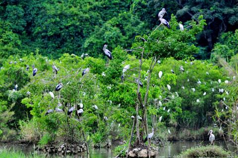 Ninh Binh - baie d'Halong terrestre- ThungNham