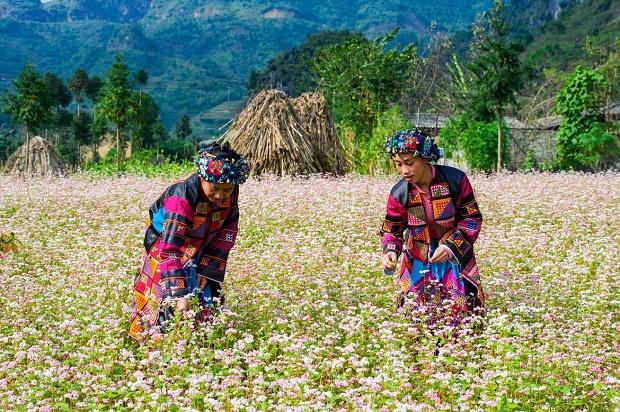 Les Lolos fleuris à Ha Giang