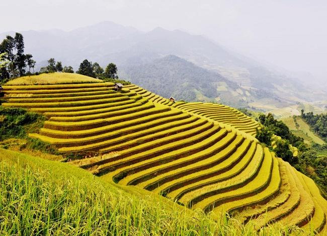 climat-vietnam-riziere-terrasse-Vietnam-fin-septembre