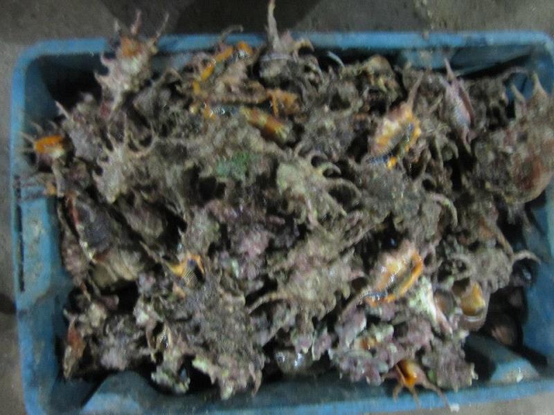 fruits-de-mer-Ly-Son2