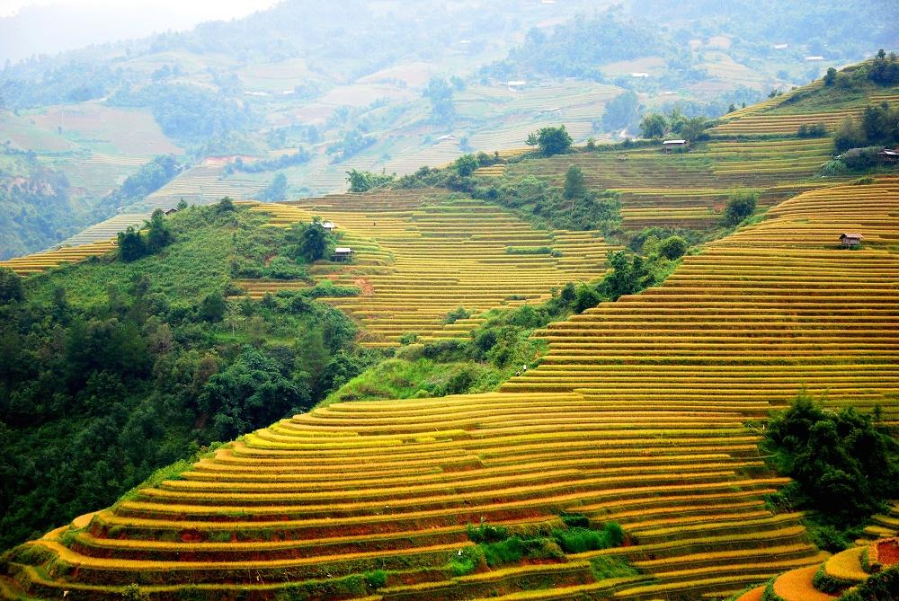 riziere en terrasse au village de Che Cu Nha