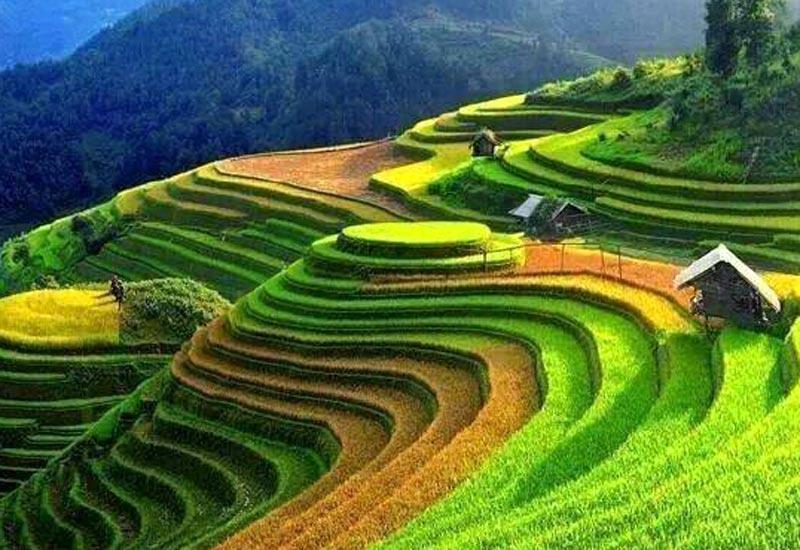 rizieres en terrasse Sapa1