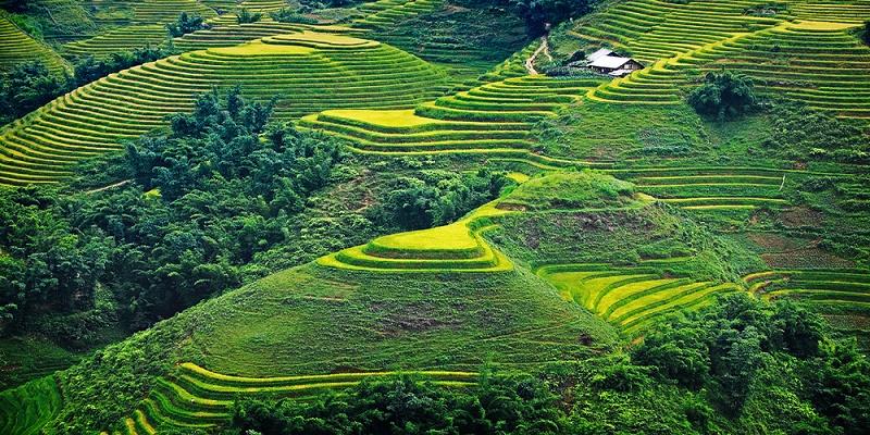 rizieres en terrasse Sapa2