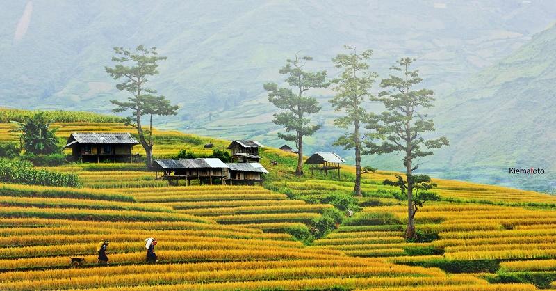 rizieres en terrasse Sapa3