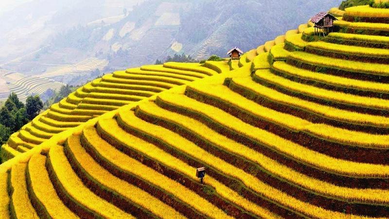 rizieres en terrasse Sapa4