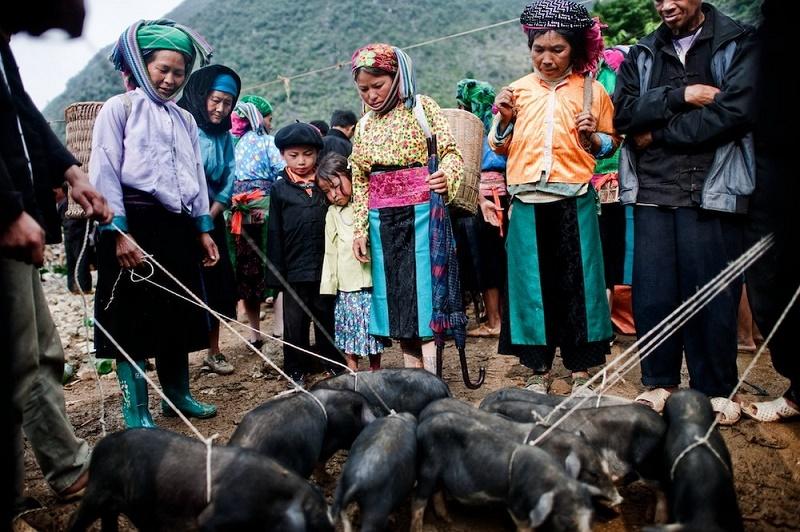 se vendre des cochons au marche ethnique