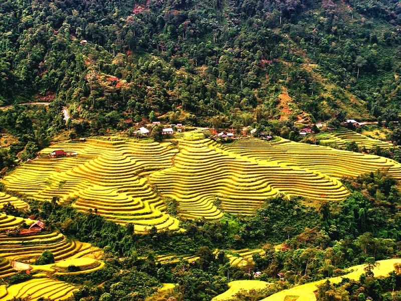 rizieres-terrasse-commune-thong-nguyen-hoang-su-phi-ha-giang