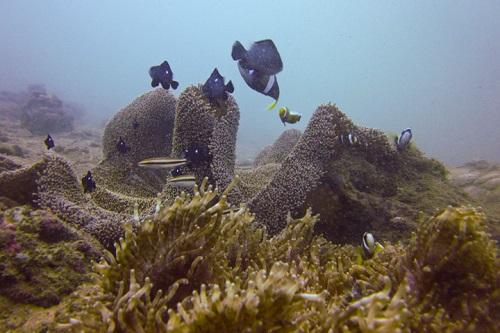 [Nha Trang Vietnam] Farniente sur les plus belles plages et plongée-fonds-marins