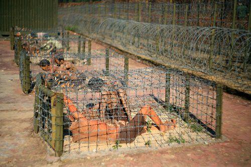 cage-Tigre-prison-Phu-Quoc