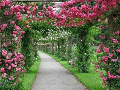 jardin-orchidée-montagne-Ham-Rong-Sapa