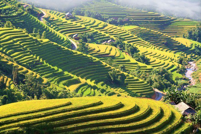 Rizières en terrasse fascinantes à Hoàng Su Phì