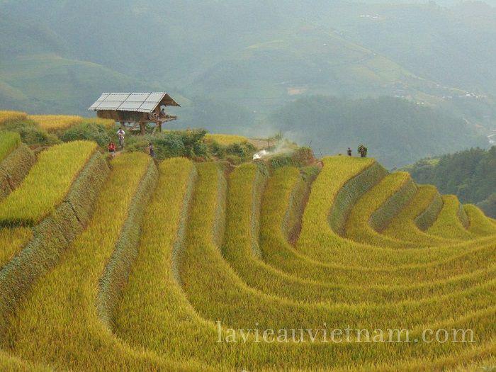 rizieres-terrasses-Mu-Cang-Chai-septembre (1)