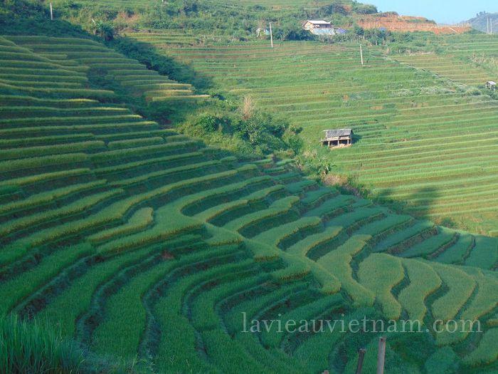 rizieres-terrasses-Mu-Cang-Chai-septembre (2)
