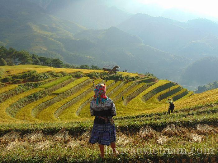 rizieres-terrasses-Mu-Cang-Chai-septembre (4)