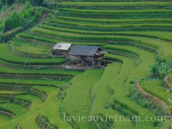 rizieres-terrasses-Mu-Cang-Chai-septembre (7)