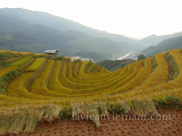 rizieres-terrasses-Mu-Cang-Chai-septembre-village-Sang-Nhu