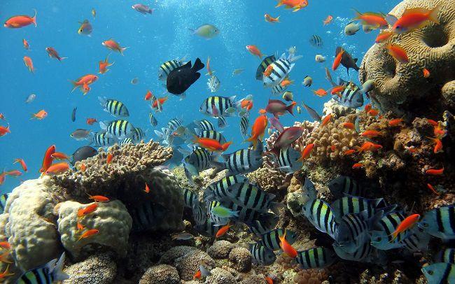 plongée à l'île de Con Dao